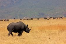 Rhino Crater