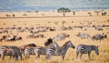 Serengeti Np Migration Crop760x440