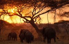 Tarangire National Park 016