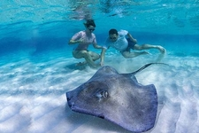 Cruise Ship Visitor At Stingray City In The Cayman Islands