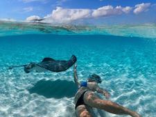 Swim With Stingrays