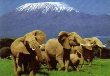 Kenya Safari In Kenya 2716