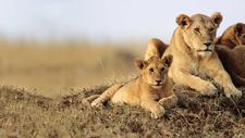 Maasai Mara 21317263 1483437002 Imagegallerylightboxlarge