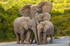 Mara Timbo Camp Masai Mara Herd Of Cheeful Elephants In The Mara Big Five