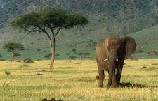 Masai Mara National Reserve 016
