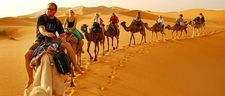 Camels Merzouga Desert