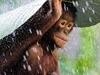 Brainy Monkey