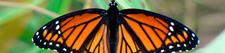 Butterflycocodrile 1