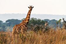 Dagomschrijvingen 3 Days Murchison Falls Day01
