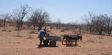 A Donkey Cart Along The Gravel Roads