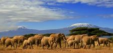 Elephants Amboseli