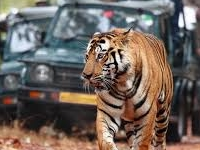 best travel agent in delhi
