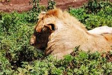 Hello Tanzania Safaris