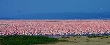 Lake Nakuru For Website 1