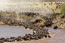 Mara Game Reserve 3 1