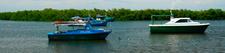 Mfishing 1