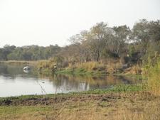 Miombo Woodland Bordering Lake Chivero