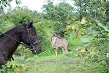 Horse Riding Safari Kudu Bull Preview