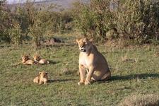Lion 3028170 960 720