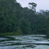 Analamazaotra Special Reserve