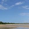 Mozambique Mangroves
