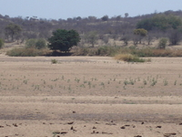 Thuli Parks and Wildlife Land