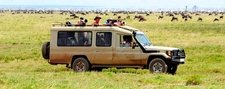 Luxury Safari To Tarangire Serengeti And Ngorongoro