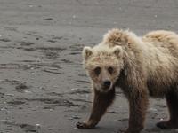 Bears Want In Boat 60