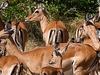 Entuuha Safaris 13