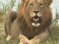 Judith Safaris