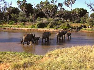 5 Days Ultimate Kenya Safari Photos