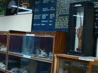 Zoological Survey of India Museum
