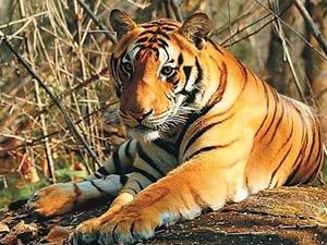 Satkosia Tiger Reserve Tour Fotos