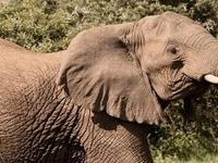 Game Viewing Masai Mara Safari