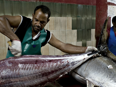 Fisherman Working In Fish Market Malce City Maldives