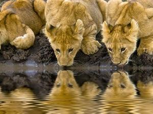 3 Days 2 Nights Wildbeast Migration Masai Mara Safari
