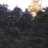 Abies Fabri Forest