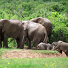 5-Day Garden Route Adventure Tour: Addo National Park, Jeffreys Bay, Wilderness National Park, Cango Wildlife Ranch and Oudtshoo