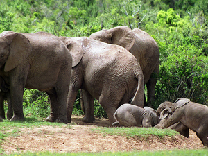 5-Day Garden Route Adventure Tour: Addo National Park, Jeffreys Bay, Wilderness National Park, Cango Wildlife Ranch and Oudtshoo Photos