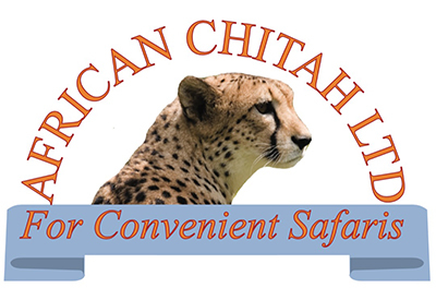 African Chitah
