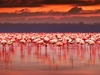 Afrikan Flamingoes At Lake Nakuru