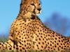 Agama Tours & Safaris - Arusha