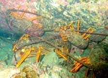 A Group Of Crayfish In The Reserve