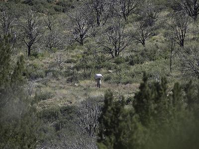 Agua Fia National Monument - Arizona
