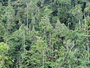 Aketajawe-Lolobata Parque Nacional