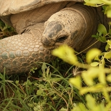 Al Ain Zoo Tortoise