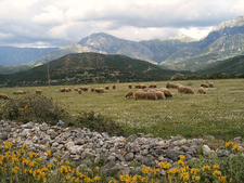 Albania Mountain Meadow