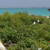 Albatross Birds At Northwest Hawaiian Islands National Monu