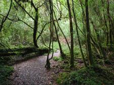 Alerce Andino National Park