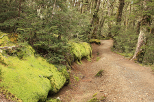 All Weather Track - Te Urewera National Park - New Zealand